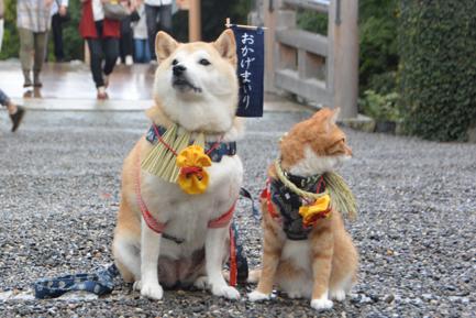 貓咪狗狗雙拍檔6