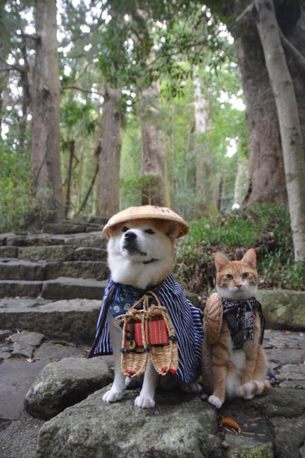 貓咪狗狗雙拍檔8
