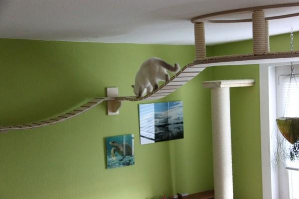 貓咪遊樂園10