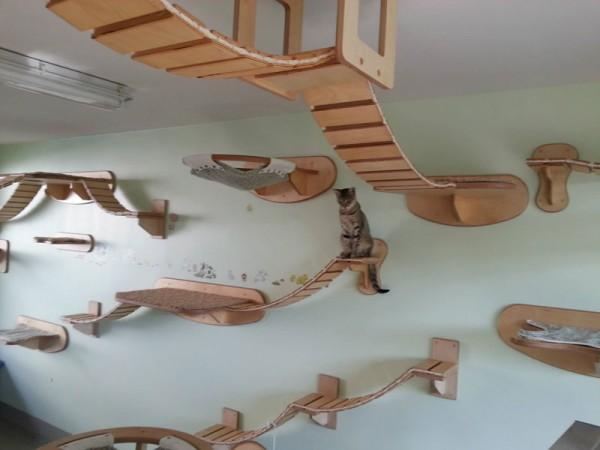貓咪遊樂園11