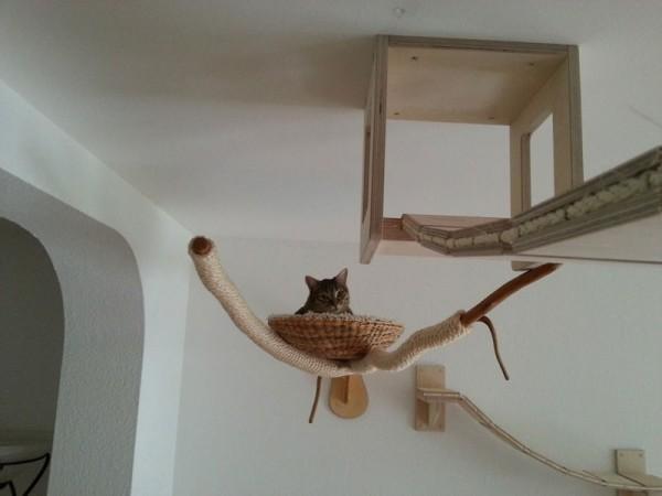 貓咪遊樂園12