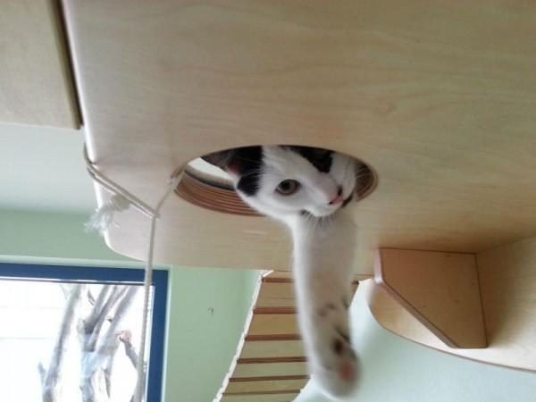 貓咪遊樂園13