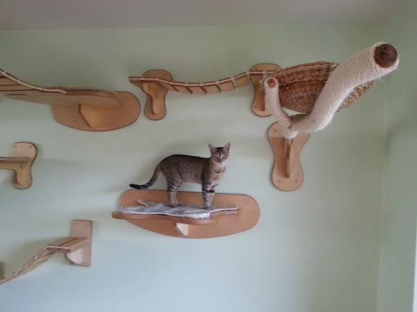 貓咪遊樂園2