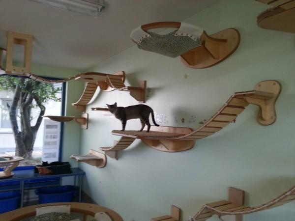貓咪遊樂園4
