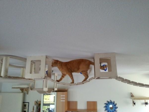貓咪遊樂園7