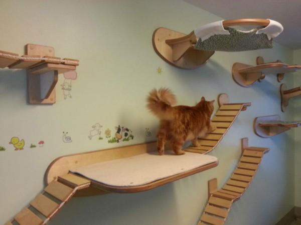 貓咪遊樂園9