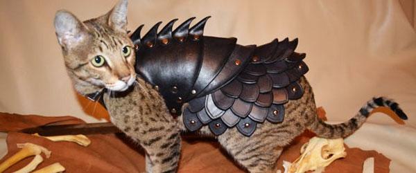 貓星人武裝升級