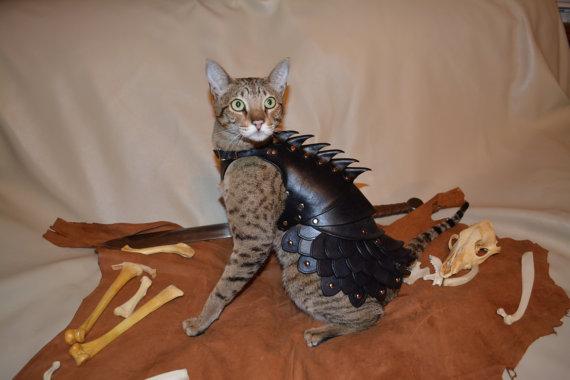 貓星人武裝升級4