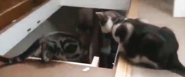 貓狗爬樓梯