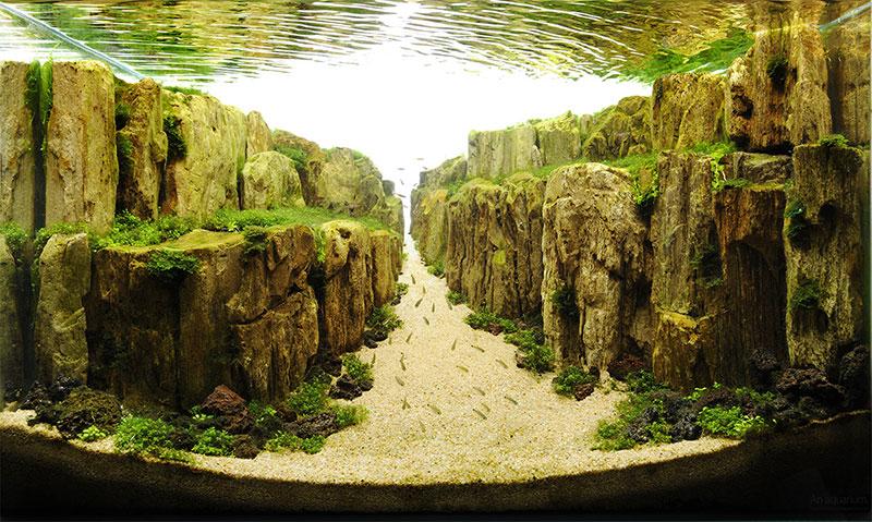 魚缸造景33
