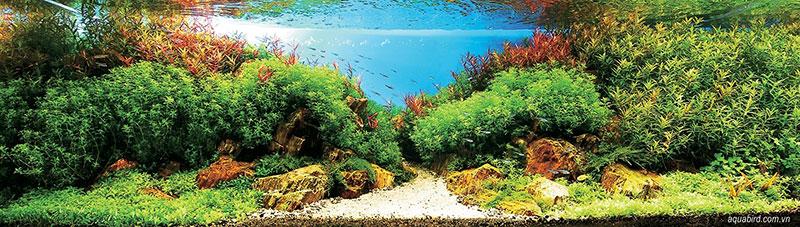 魚缸造景53