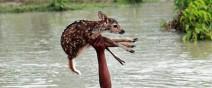勇敢男孩捨身救鹿