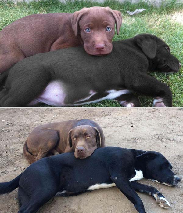 寵物長大後15