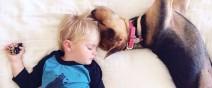 小孩與狗2