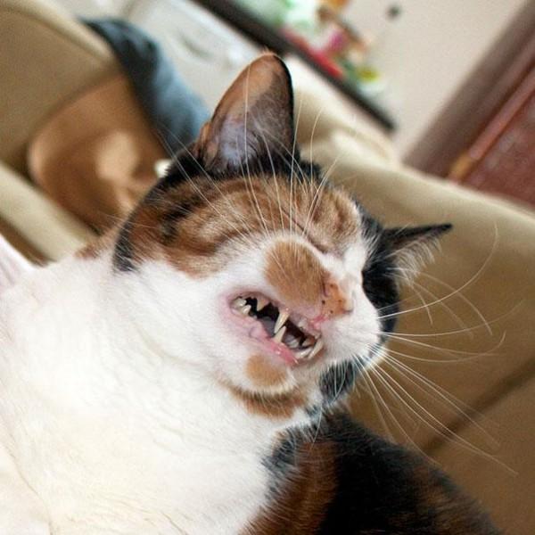 打噴嚏貓12