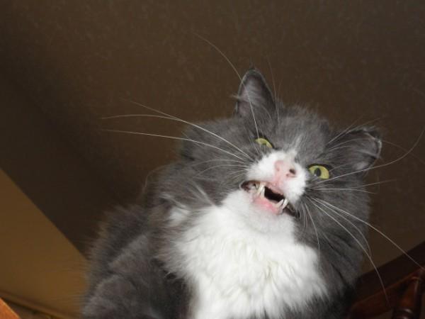 打噴嚏貓19