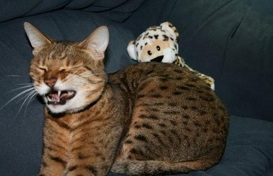 打噴嚏貓4