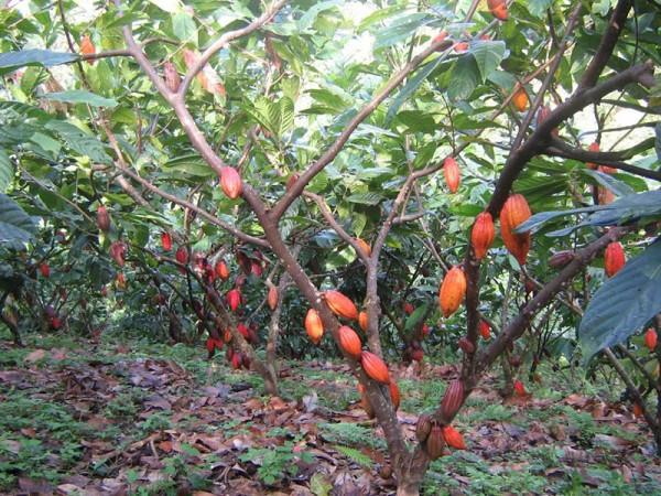 水果ˋ這樣長1