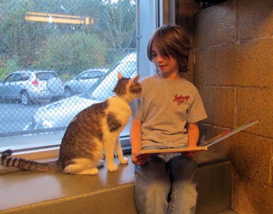 讀書給貓聽的孩子6