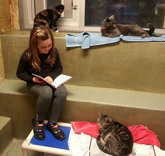 讀書給貓聽的孩子7