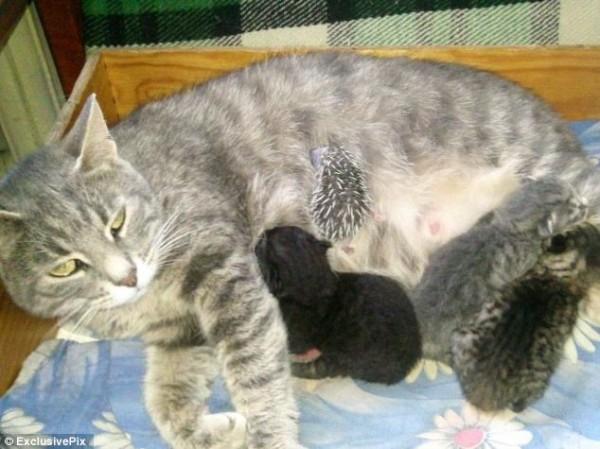 貓咪收養刺蝟寶寶1