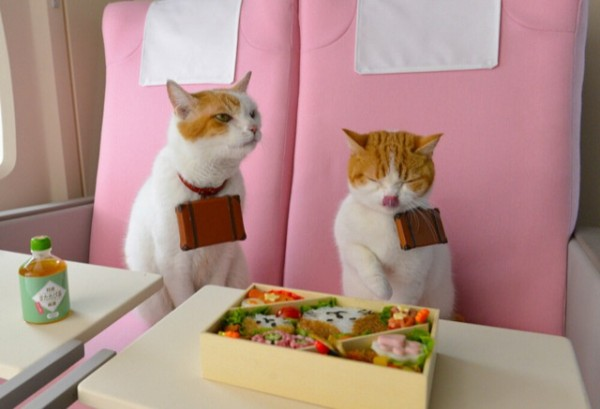 貓咪觀光1