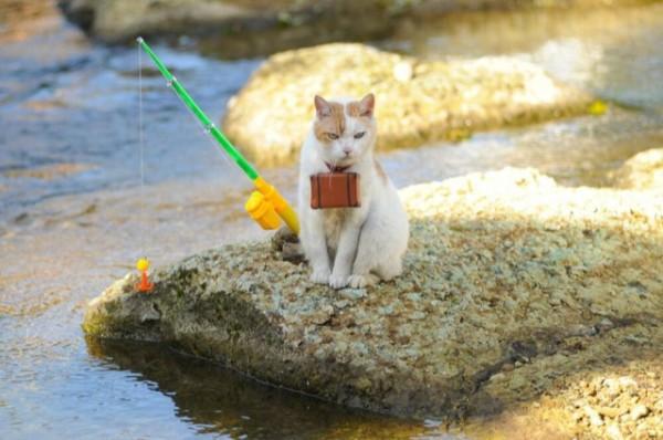 貓咪觀光12