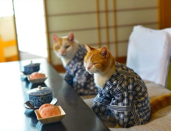 貓咪觀光13