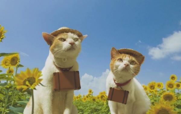 貓咪觀光14