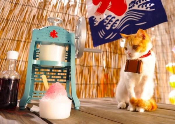 貓咪觀光15