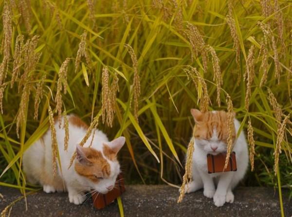 貓咪觀光18