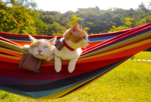 貓咪觀光19