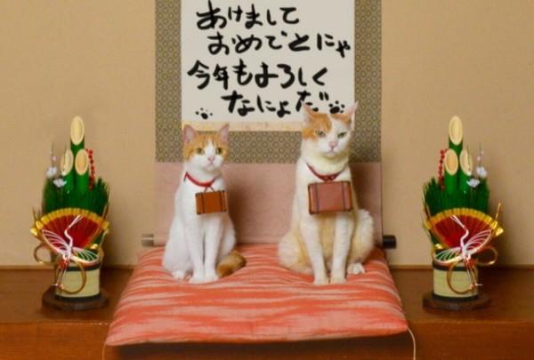 貓咪觀光2