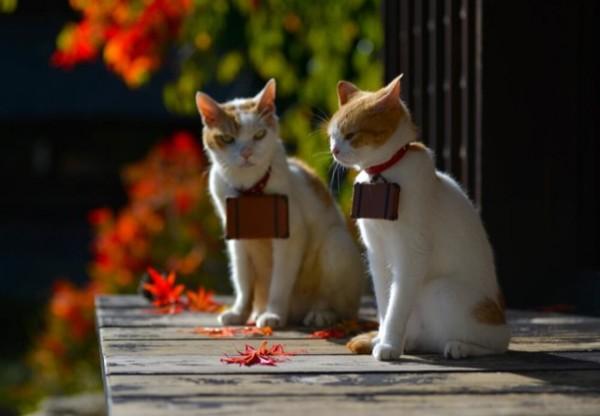 貓咪觀光20