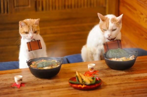 貓咪觀光21