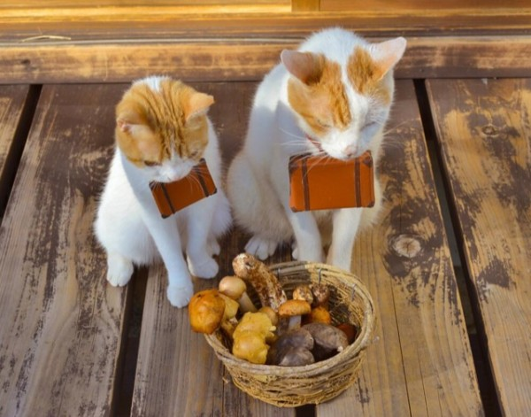 貓咪觀光22