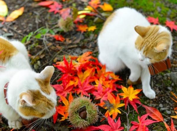 貓咪觀光23