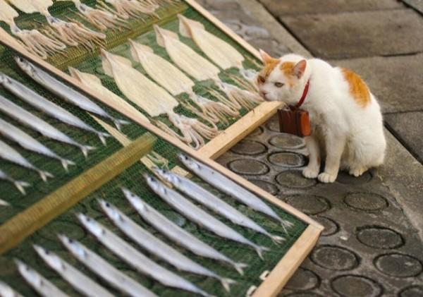 貓咪觀光24