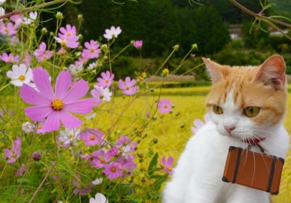 貓咪觀光25