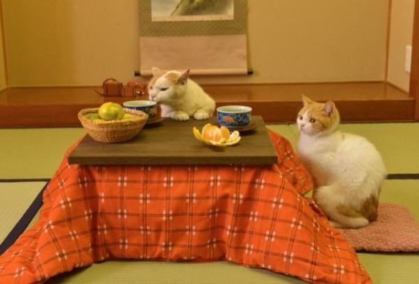 貓咪觀光27