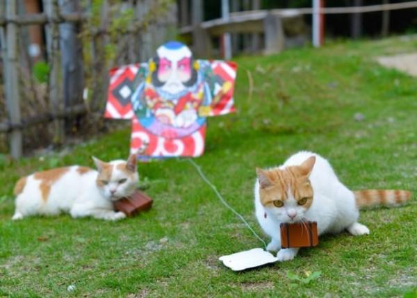 貓咪觀光3