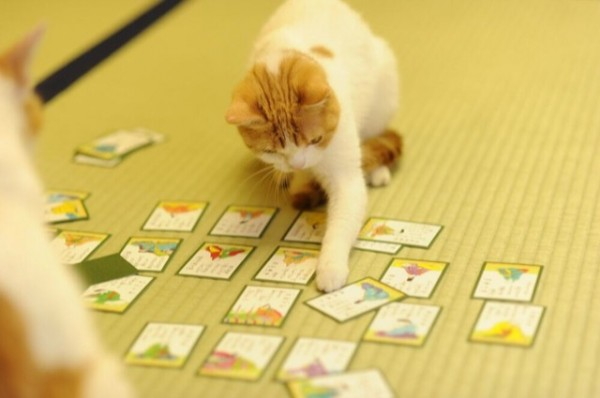 貓咪觀光4