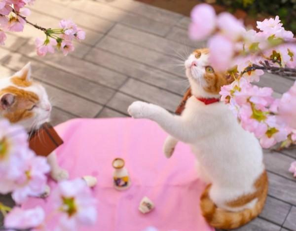 貓咪觀光5