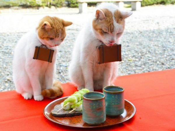 貓咪觀光6