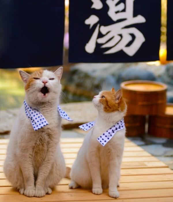 貓咪觀光7