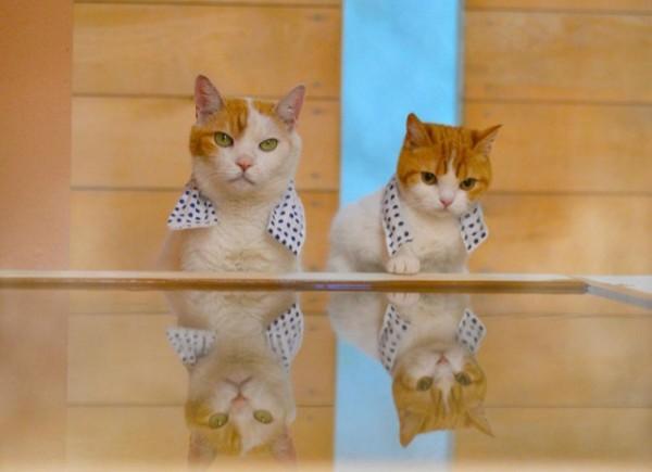 貓咪觀光8