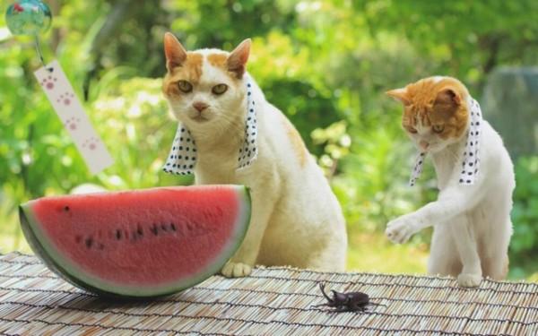 貓咪觀光9