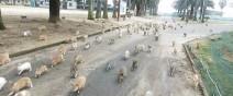 遊客被上百隻兔子追0