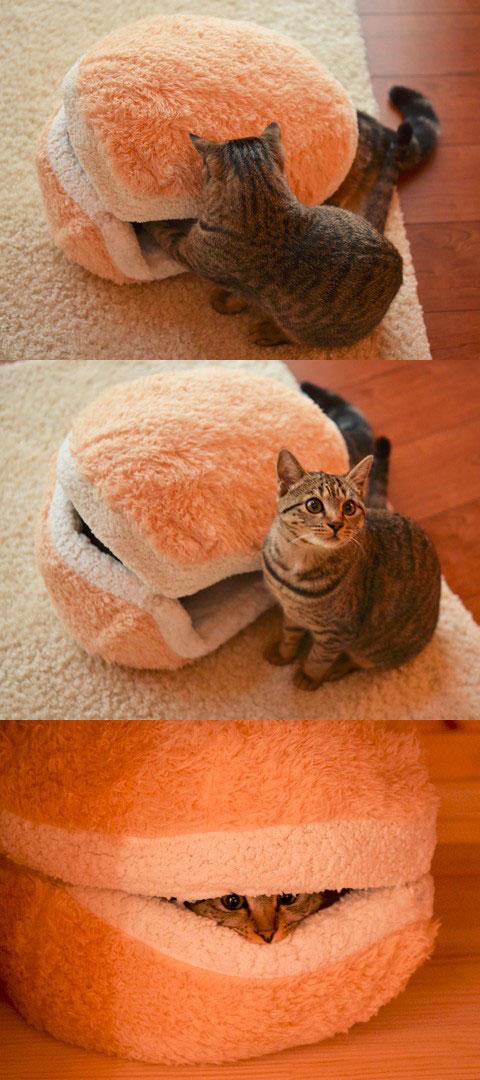 貓咪漢堡3
