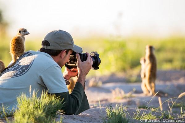 Photographing Meerkats